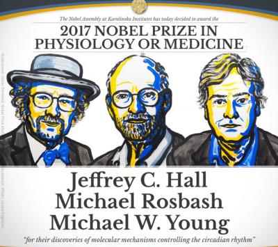 Relógio biológico rende Nobel de Medicina a três americanos